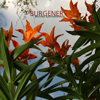 Burgener - Another Summerbreeze